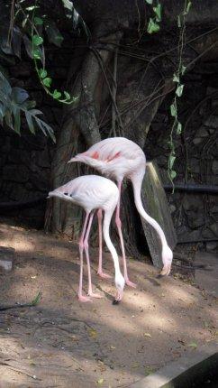 flamingo bird sri lanka