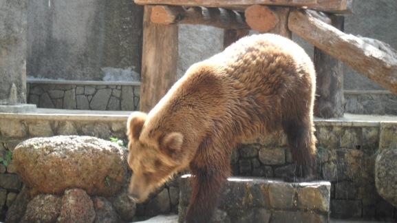 sri lanka bear